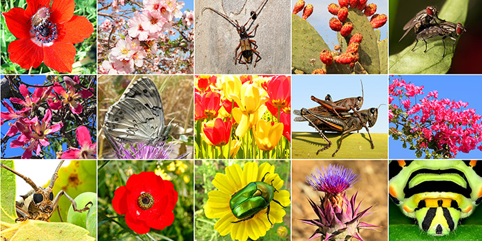 Agrobiodiversity - Why does it matter?
