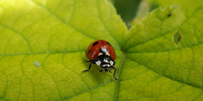 Pest and disease identification: problem solver
