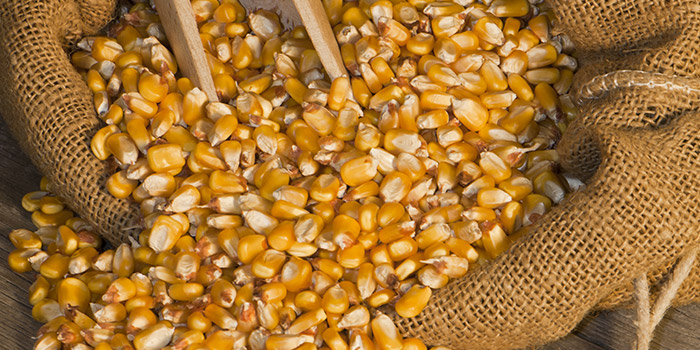 Postharvest grain loss and small-scale farmers