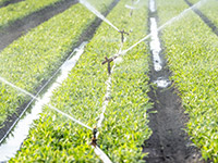 Irrigation in Agriculture