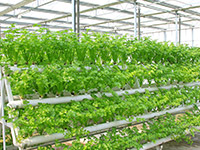 The Race Towards the 4th Industrial Revolution in the Agricultural Sector